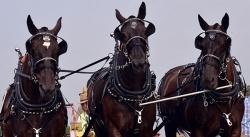馬具での使用例1