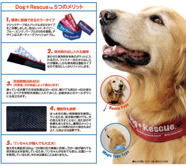ウランチアのドッグ+レスキューは真夏の高温から愛犬を守ります