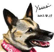 愛犬の肖像画をアバウトマイドッグズの石居寧が制作します。