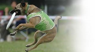 ミックス犬のためのディスクドック講座